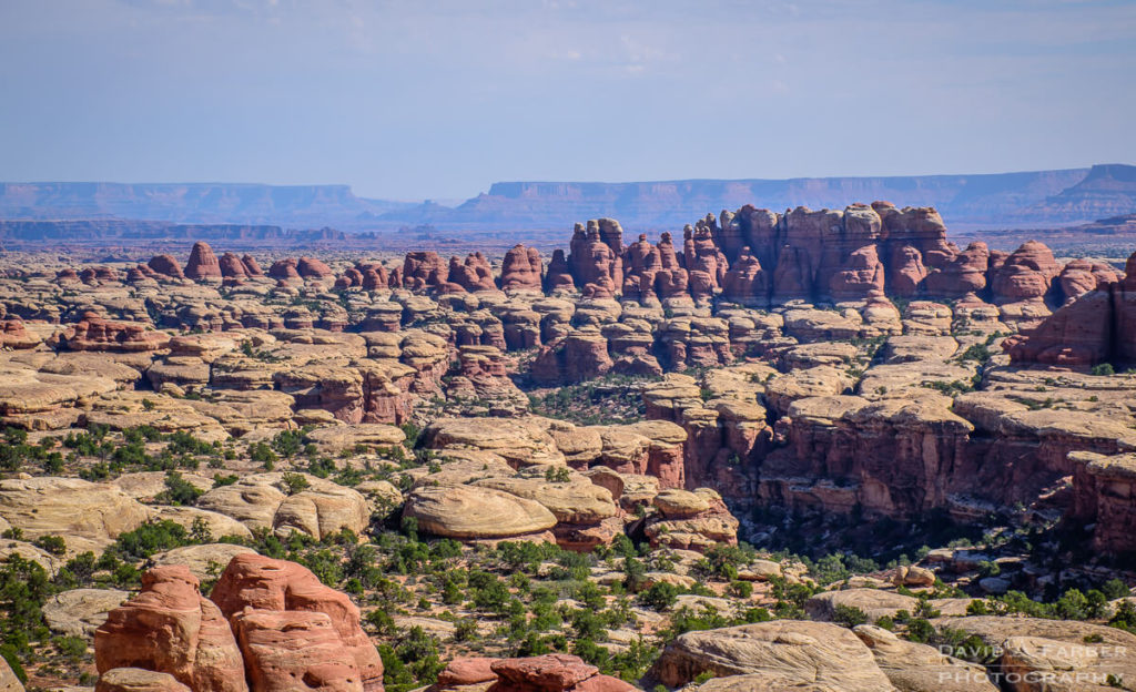Rock Pinnacles in the Needles District | Canyonlands National Park